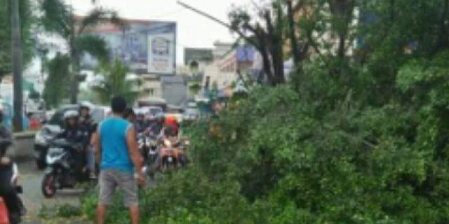 Ditabrak Damp Truk, DLH Manado Bersihkan Pohon Tumbang