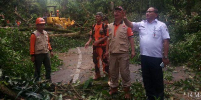 Sekkot Pantau Pembersihan Pohon Rawan Tumbang Jl. Tomohon-Manado