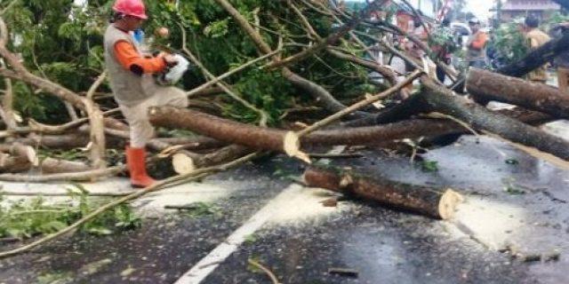 Antisipasi Pohon Tumbang, DLH Manado Siagakan Satgas